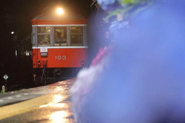 塔ノ沢駅から紫陽花と登山電車