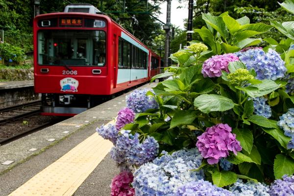 宮ノ下駅から紫陽花と箱根登山電車